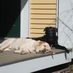 Coda and Prouty sunbathing
